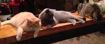 Feline Fur Kids