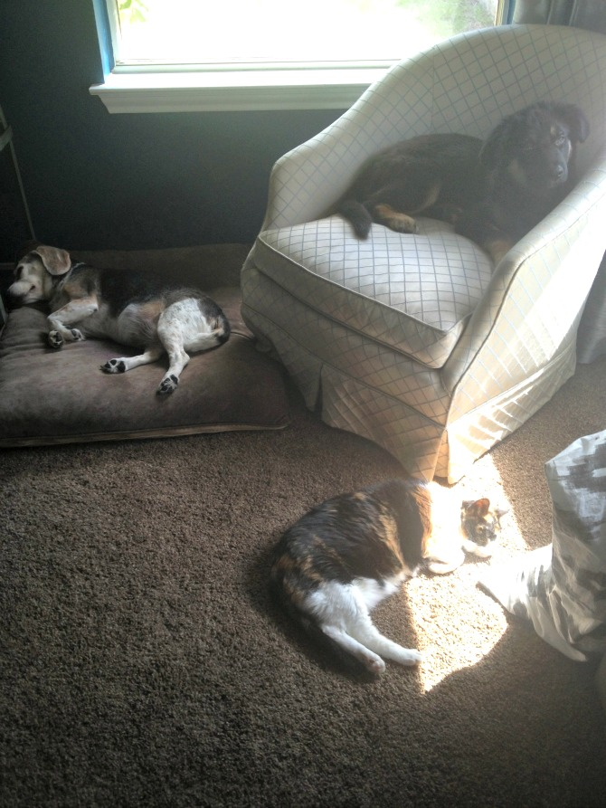 The Holland House: Lazy Animals