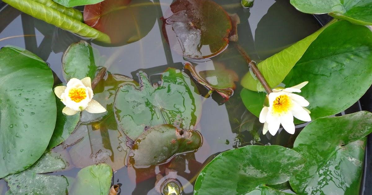 Il giardino delle naiadi aprile pulizie nel laghetto for Pulizia laghetto