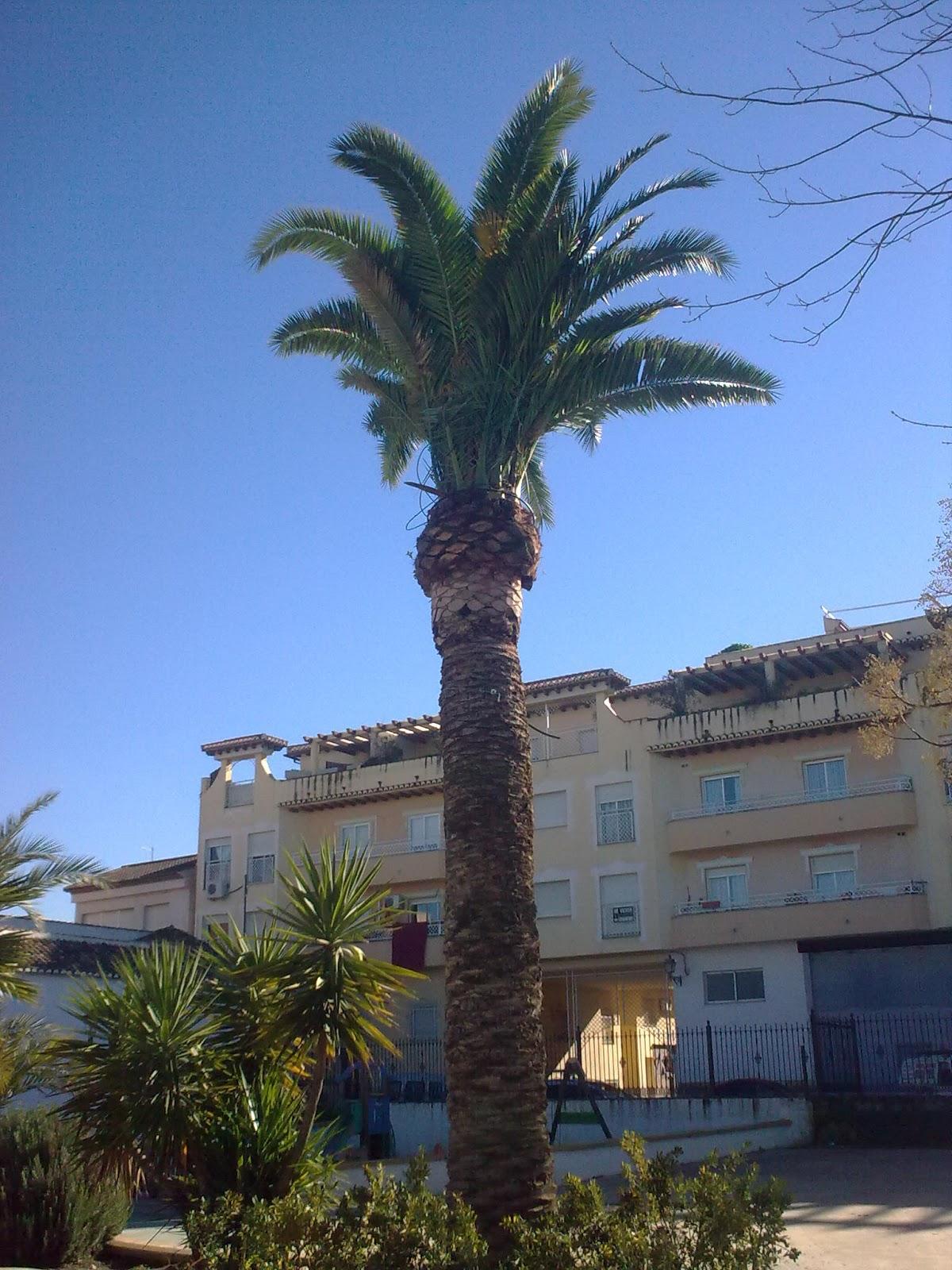 Parques y jardines de ogijares arreglo palmera y desbroce for Arreglos de parques y jardines
