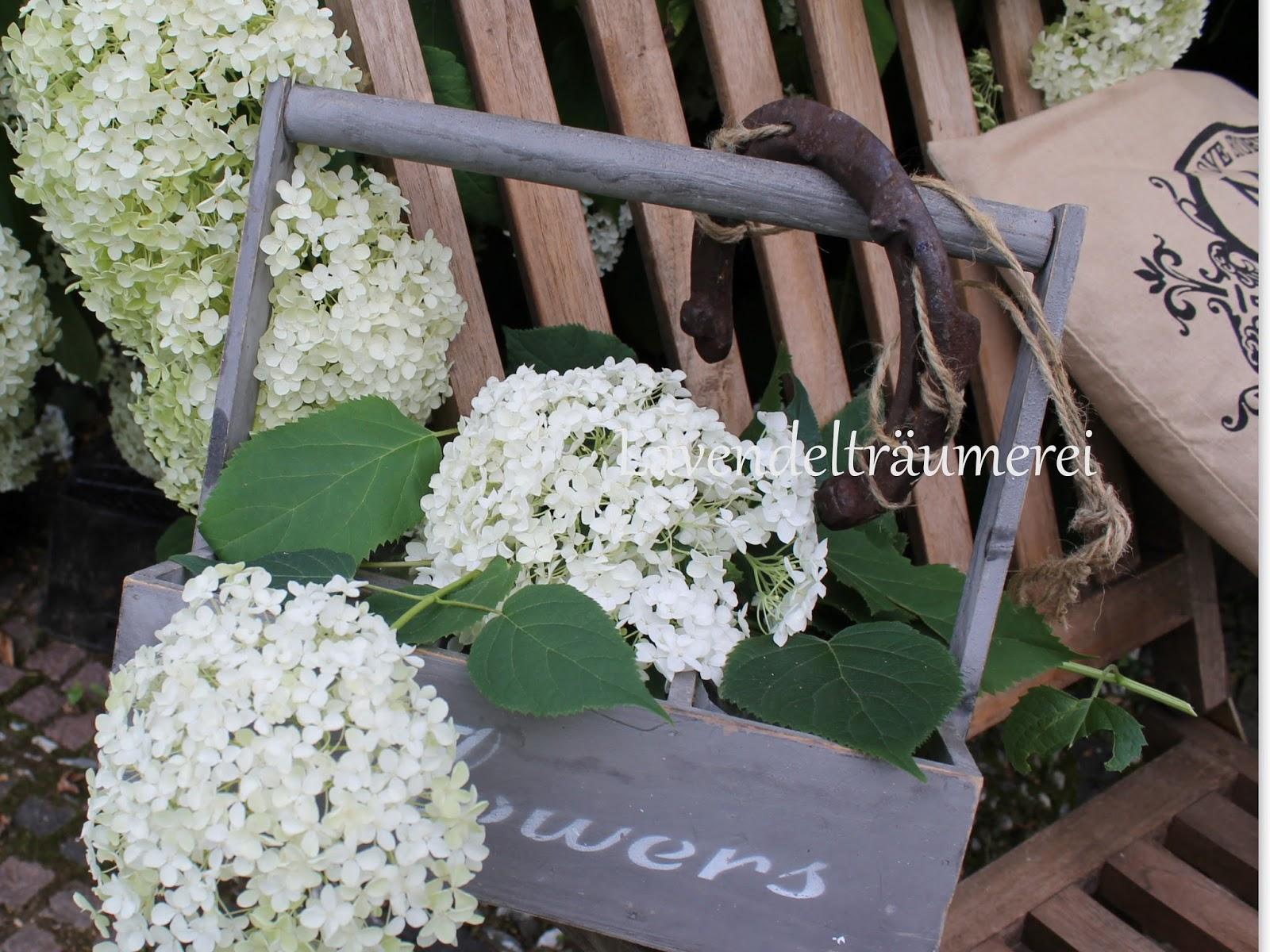 hortensie annabell hortensie 39 annabelle 39 kaufen. Black Bedroom Furniture Sets. Home Design Ideas