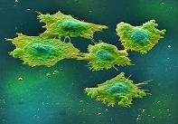 χημειοθεραπεία, φυσικές θεραπείες καρκίνου,
