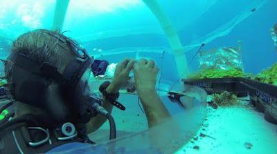 Tanaman Pangan Berhasil Tumbuh di Bawah Air