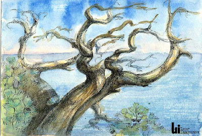 Crimea pine tree artwork