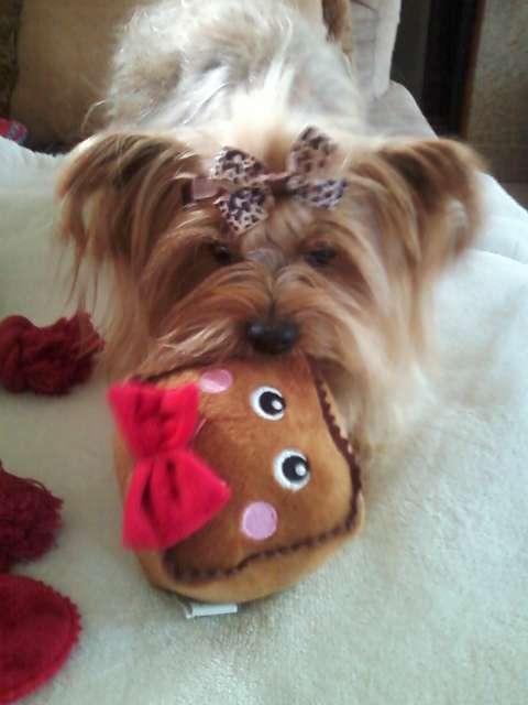 Martha Stewart Pets Pet Halloween Pumpkin Domed Dog Bed
