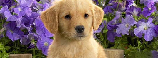 Puppies List Pictures
