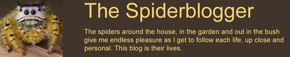 The Spiderblogger