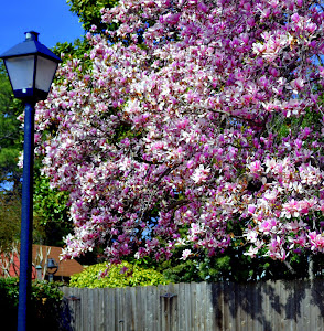 Pink Tree Olde Towne Portsmouth