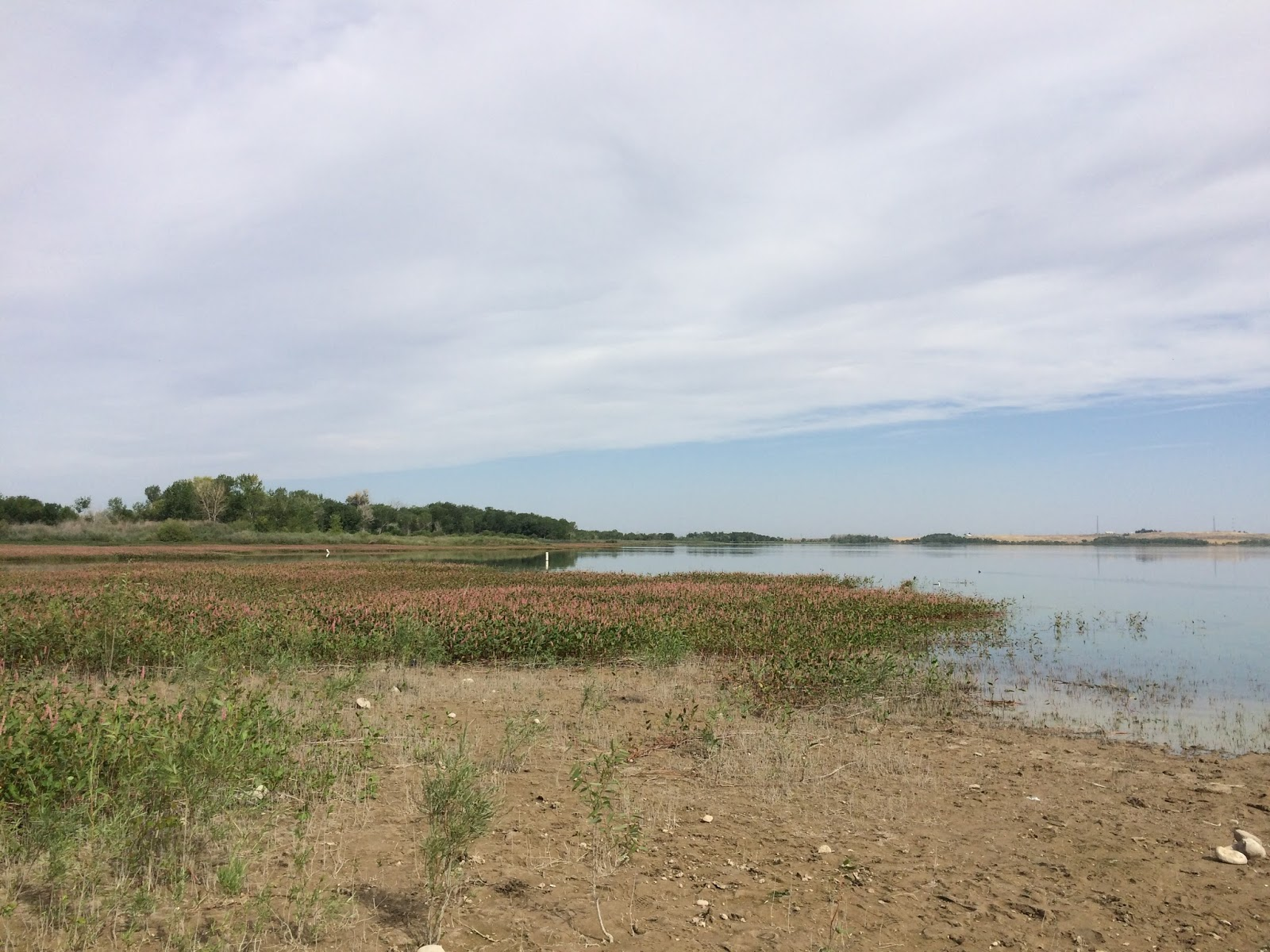 Ryan s fly fishing and hunting blog dove hunting for Lake lowell fishing
