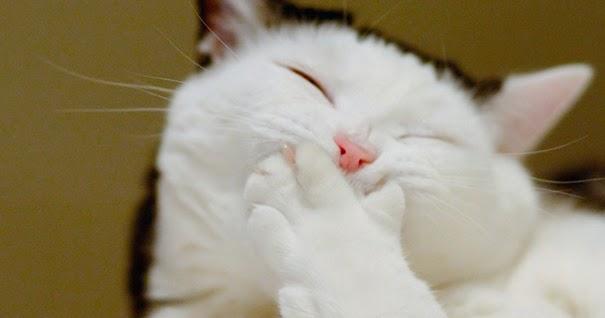 Resultado de imagem para gato sorrindo
