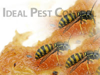wasp control delta