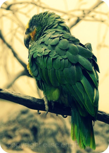 Green Bird on a Branch