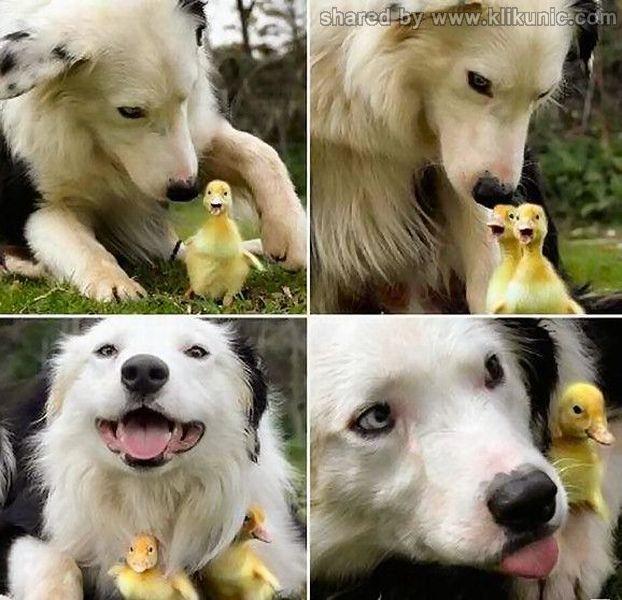 http://2.bp.blogspot.com/-OYceoADevwQ/TXXaSK5emNI/AAAAAAAAQaY/EGYpzp_fZQ0/s1600/these_funny_animals_632_640_23.jpg