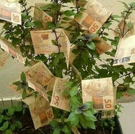 Grupo Gerir dinheiro