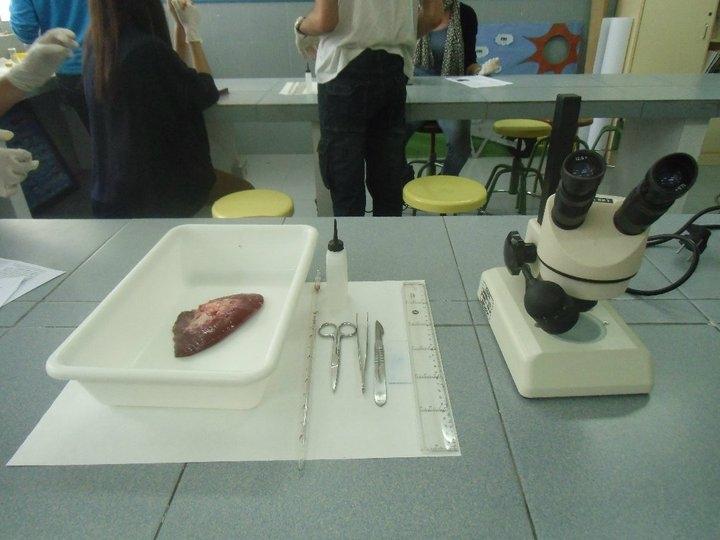 Biología Humana: Andrea y Claudia