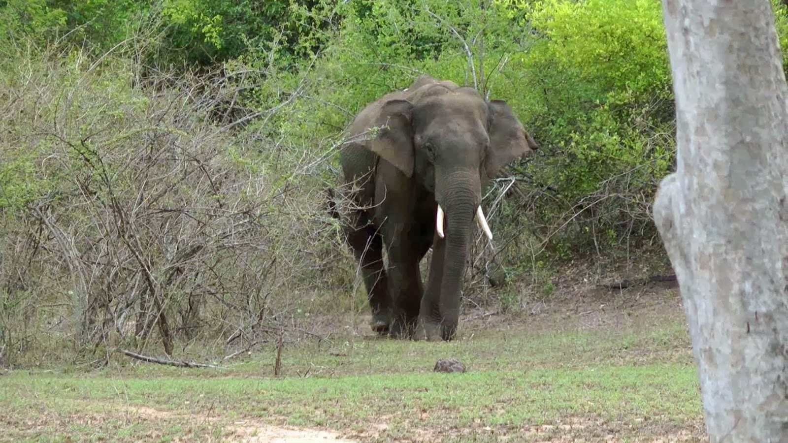 Elephant safari at Tholpetty Wildlife Sanctuary