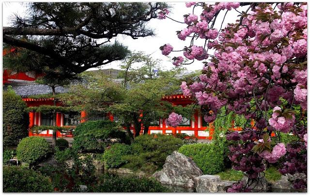 http://2.bp.blogspot.com/-OZaXhMdvB3c/URi0IZza17I/AAAAAAAAVcw/TNKk343g47Y/s640/Spring+in+Japan+(10).jpg