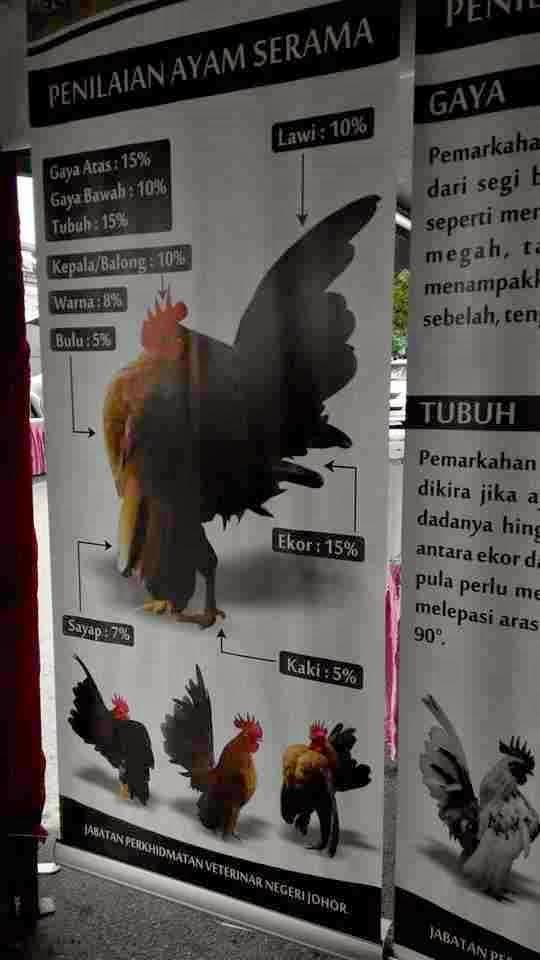 Penilaian Ayam Serama