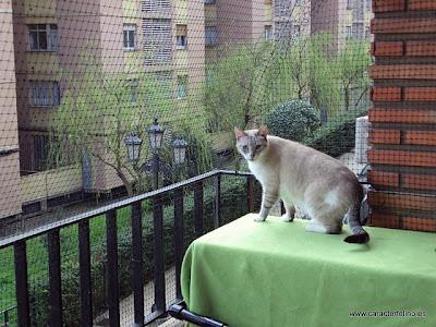 Soy un gato protege a tu gato de una ca da for Como cerrar un balcon