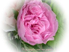 engelse roos, niet alleen voor bruidjes....
