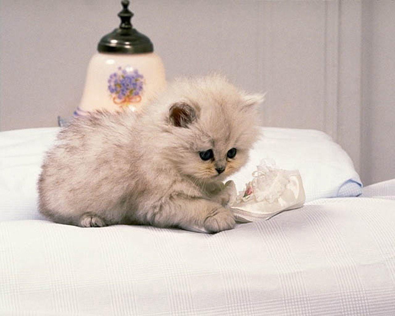 http://2.bp.blogspot.com/-OZnJc_sB1cM/TccTjFazXrI/AAAAAAAACKE/_aSGQe71L6Q/s1600/ws_cute_cat_1280x1024.jpg