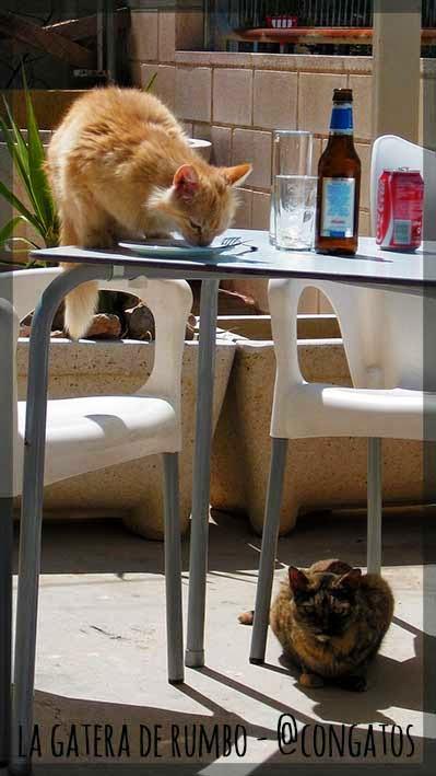 Gato comiendo en la mesa de una terraza