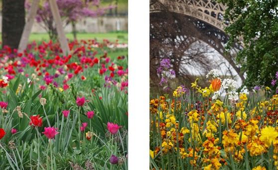 Farvestrålende blomsterbede i Paris om foråret