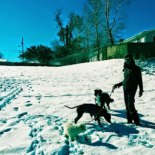 walking dogs in the snow uphill woman blog