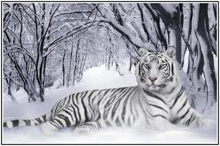 arti mimpi dikejar harimau, apa arti mimpi harimau, arti mimpi harimau lepas, arti mimpi harimau mati, arti mimpi harimau mati, arti mimpi harimau masuk ke rumah, arti mimpi harimau masuk rumah, arti mimpi harimau hitam, arti mimpi harimau putih,