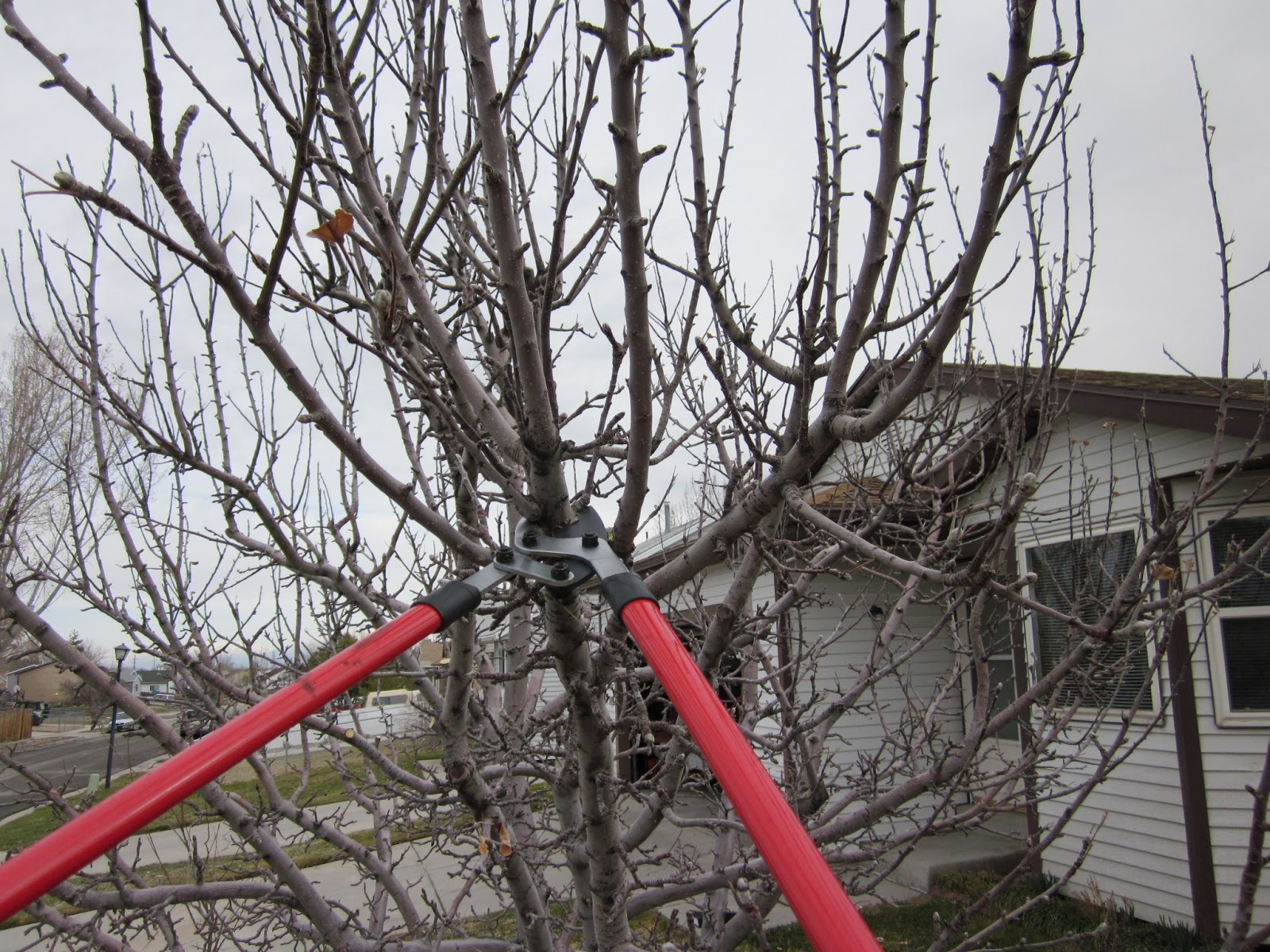 Fruit tree pruning at its best when is the best time to prune fruit trees - Spring trimming orchard trees healthy ...