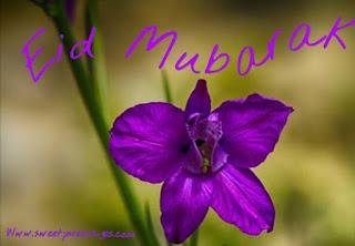 happy eid holiday
