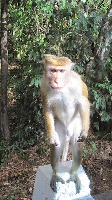 Mono pedigüeño