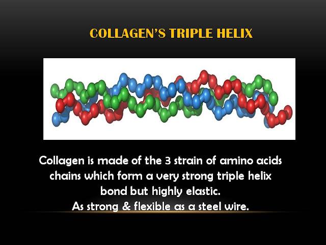 asid amino badan, cara tambah kolagen badan, protein paling penting, kebaikan kolagen, pure marine collagen zarraz paramedical