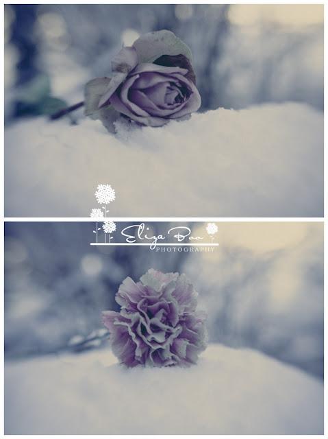 Sisterhood Stories 11 – Bring me a rose…