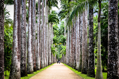 Palm trees line a path in Brazil