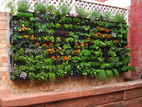 Vanilla 21 | New Vertical Garden Trends