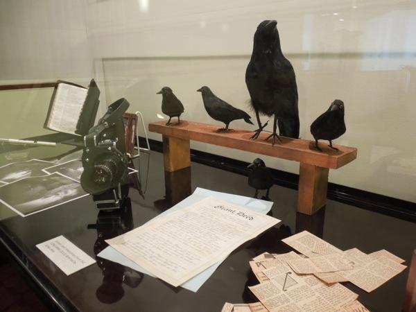 Conjuring stuffed bird props