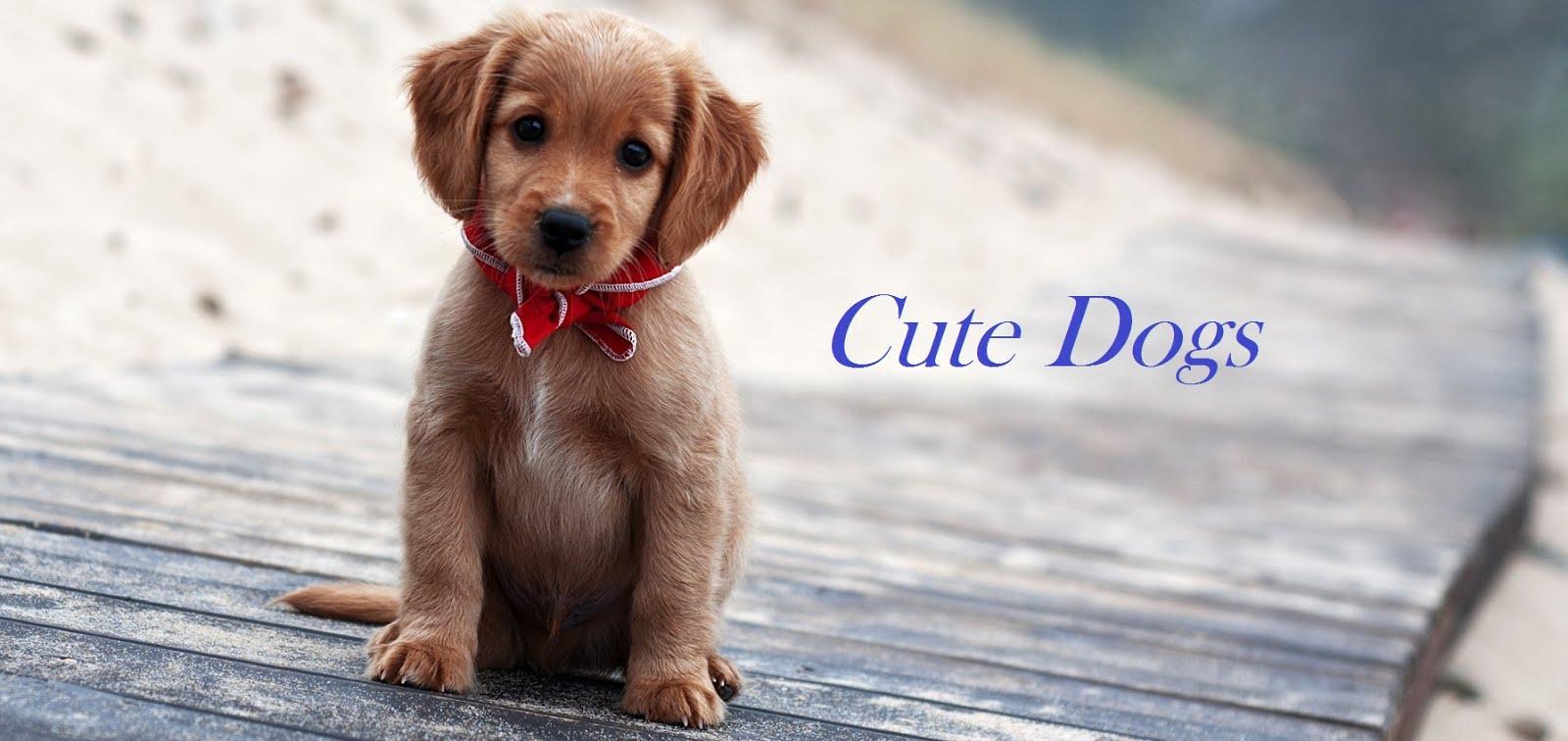 Informasi tentang pemeliharaan anjing kesayangan agar sehat dan lucu