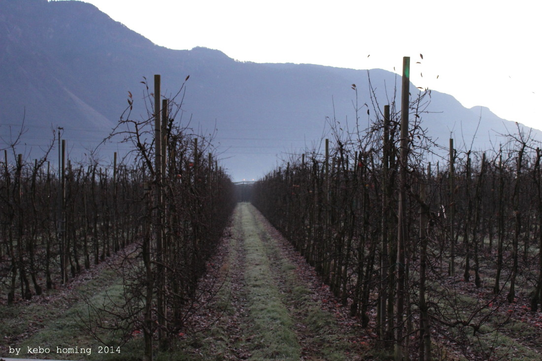 Fotografie, Südtiroler Apfel, Apfelplantagen, Apfelbäume, Dezember, Herbststaub, Photography, South Tyrol