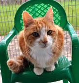 Llys Nini Cats