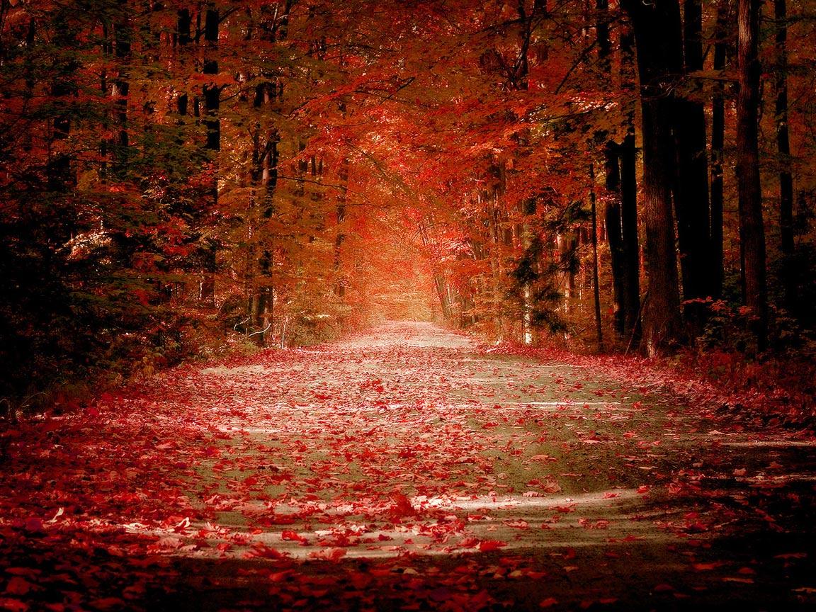 http://2.bp.blogspot.com/-ObfvpPM-0tY/Tj4n3JzPLZI/AAAAAAAAAAk/3CEhAcSDlB4/s1600/red+road+of+autumn+season+wallpaper+hd.jpg