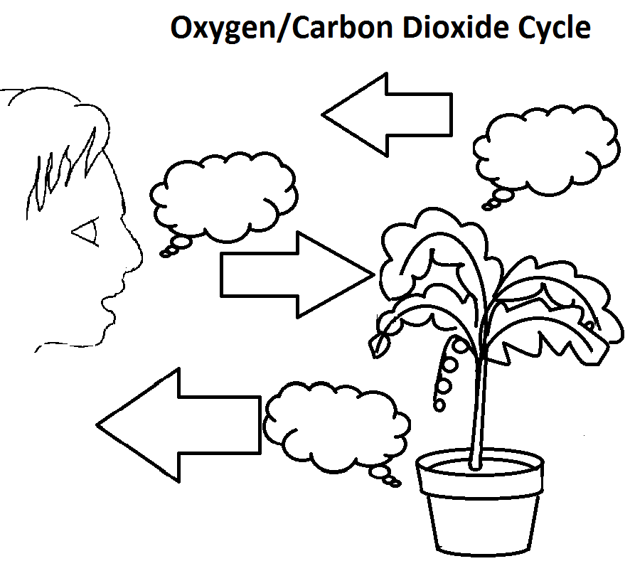 Pictures Carbon Dioxide Oxygen Cycle Worksheet - Studioxcess
