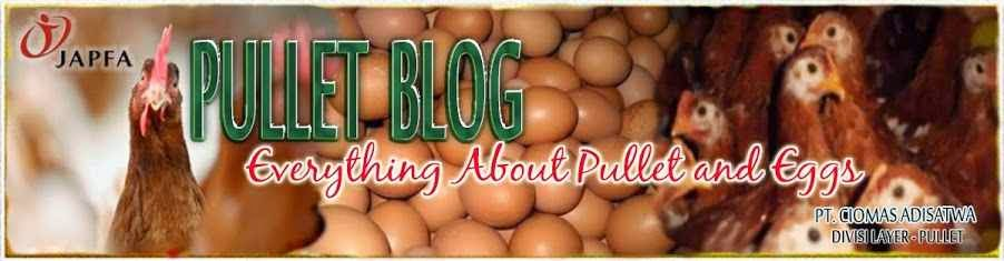 PULLET BLOG - EVERYTHING ABOUT PULLET AND EGGS