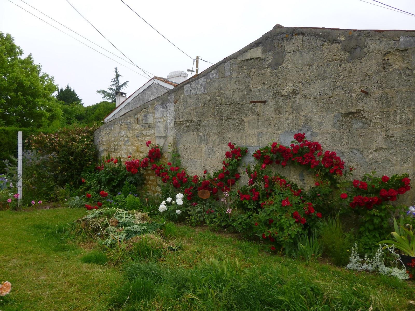 Cagouille 39 s garden le massif des rosiers grimpants rouges - Plante pour cacher un mur ...