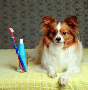 Salud dental en Mascotas