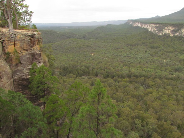 Looking down into Carnarvon Gorge from above