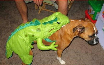 Dog Alligator Eating Costume