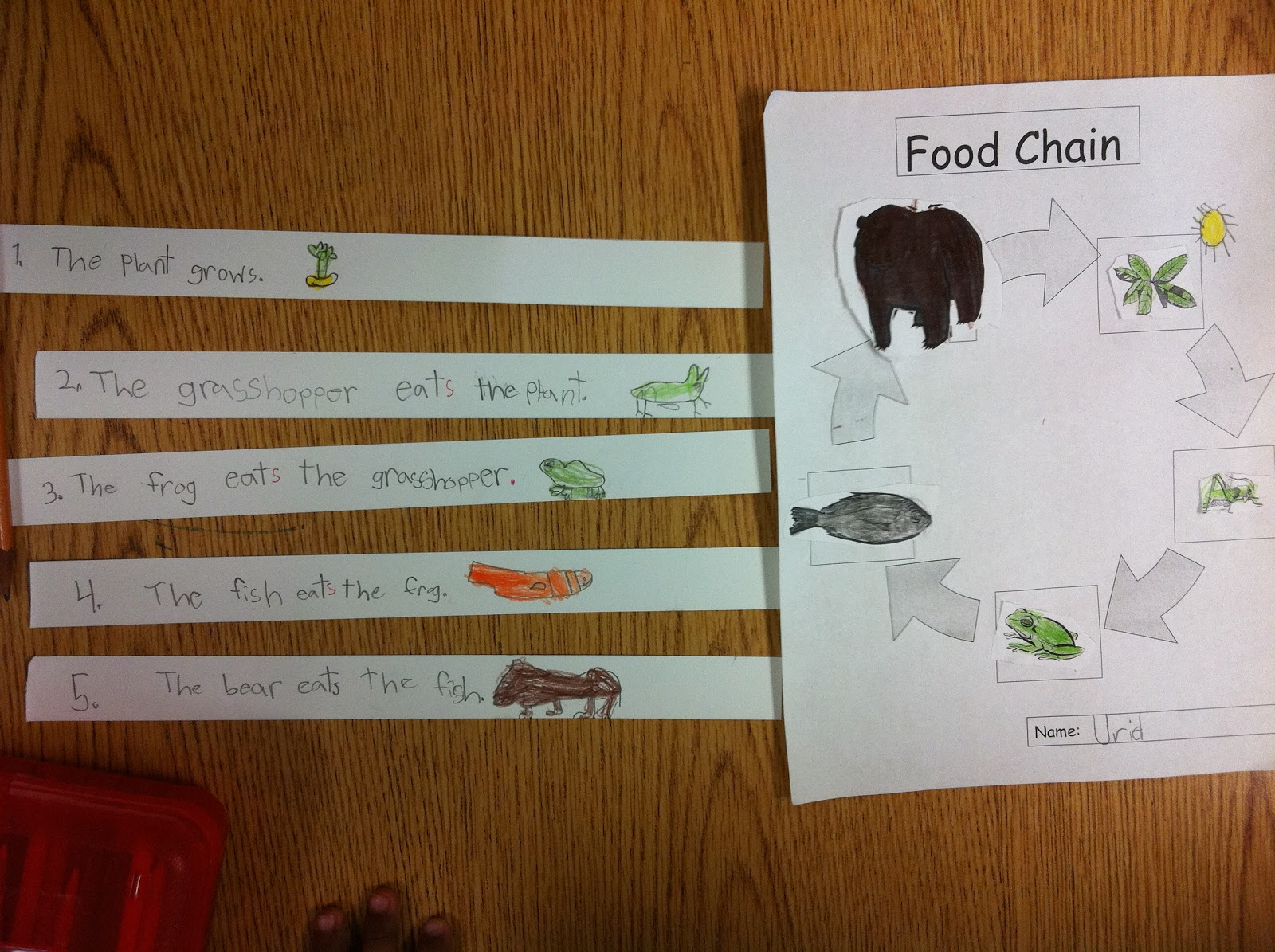 Primary esol food chain for Cuisine sentence