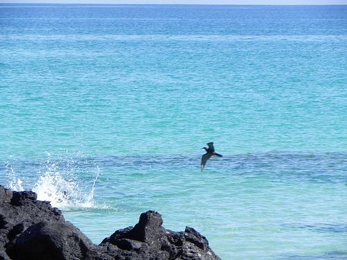 Bachas Beach Vista
