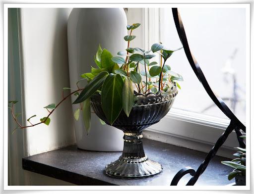 Blandade växter i glasskål, bild 1